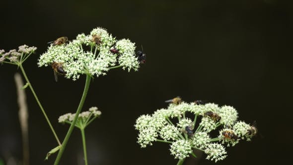 Thumbnail for Many Insects on White Plant in the Wild