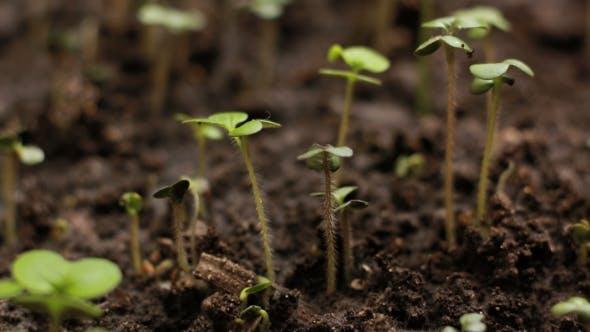 Thumbnail for Wachsende Pflanzen