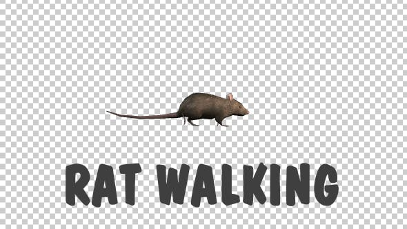 Thumbnail for Rat Walking