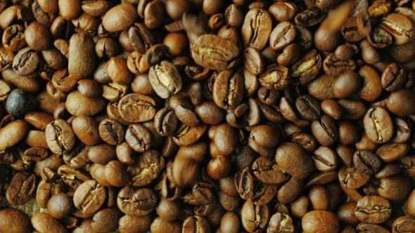 Thumbnail for Robusta Grains Fall Down on the Grain Arabica Coffee. Mixing Different Varieties for Better Taste