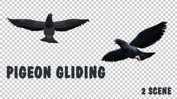 Thumbnail for Pigeon Gliding - 2 Scene