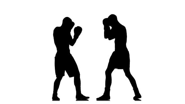 Thumbnail for Silhouette of Sportsmen Training. Two Kickboxer Sparring
