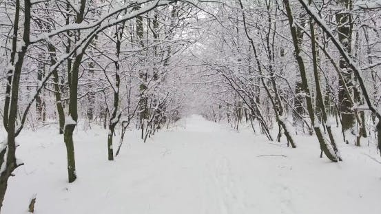 Cover Image for Winter Forest in Snow
