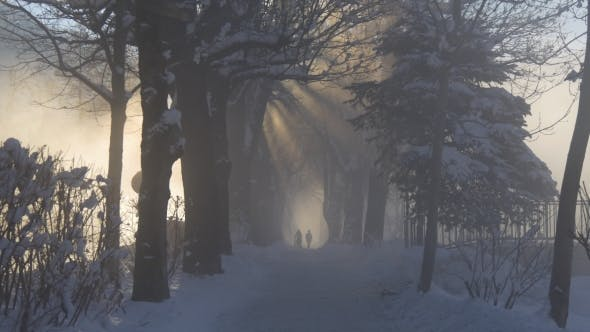 Rays of the Sun Through the Fog and Tree Branches