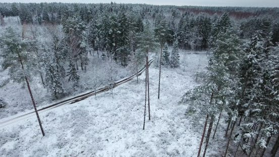 Thumbnail for Aerial View of Snowy Forest at Winter