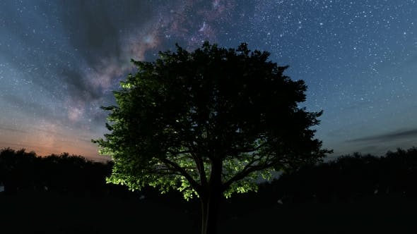 Thumbnail for Trees and Milky Way Stars at Night