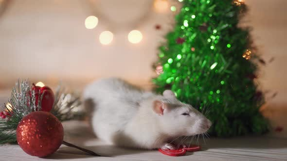 White Rat Crawls in the New Year Decorations Christmas Trees Toys Balls