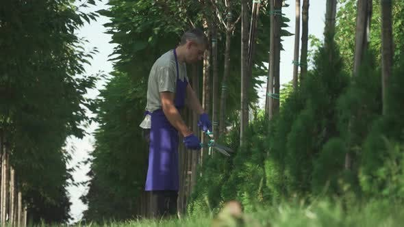 Thumbnail for Gardener Is Cutting Bushes in the Garden
