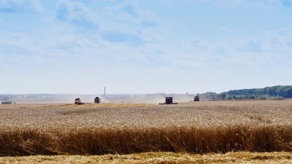 Thumbnail for Harvesting Ripe Wheat
