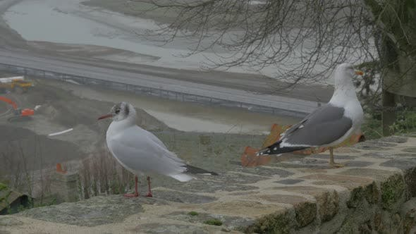 Thumbnail for Pair of gulls on Mont St Michel   tourist attraction in northern France region of Normandy  4K 2160p