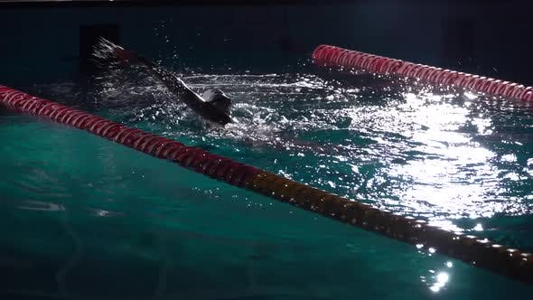 Thumbnail for Swim Finish. Swimmer in Action in Waterpool with Blue Water at Sunny Day. Night Shot