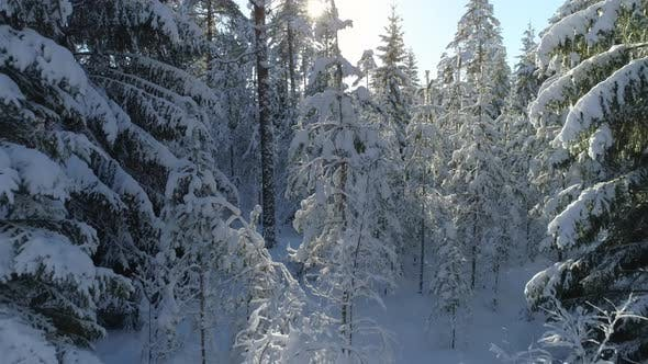 Thumbnail for Winter Wonderland in Forest Aerial View