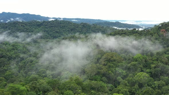 Aerial view flying closely over the tree crown through clouds of a canopy in a tropical cloudforest