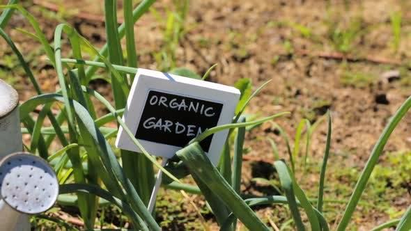 Thumbnail for Small organic vegetable garden in urban area.