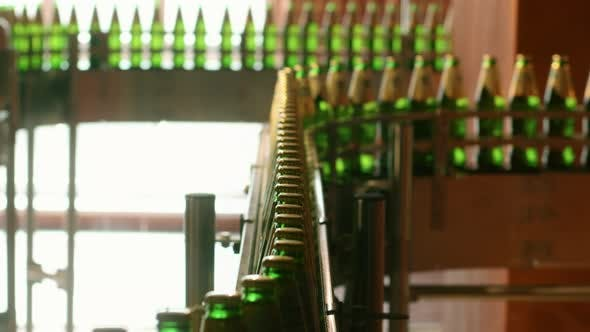 Thumbnail for Beer Bottles on Factory Manufacturing Line. Beverage Industry Conveyor Belt