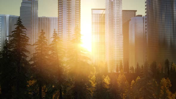 Thumbnail for Forest Hillside and City Landscape