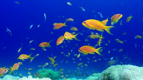 Cover Image for Beautiful Underwater Colorful Corals and Fishes