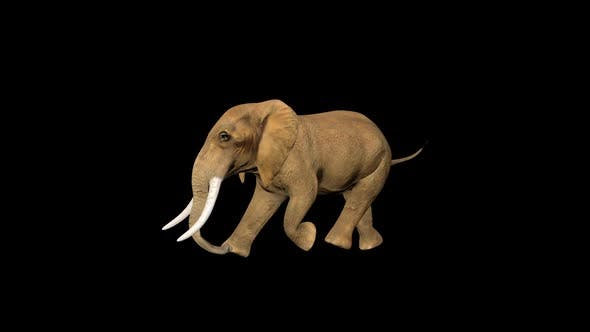 4K Tiny Circus Elephant Fast Walk