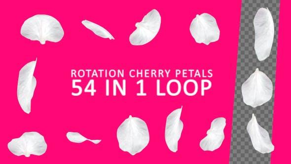 Rotation Cherry Petals