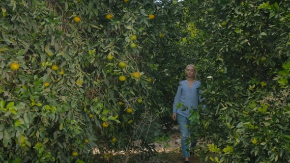 Thumbnail for Cute Young Woman Walking Among the Orange Trees on a Plantation