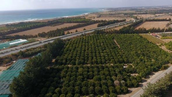 Thumbnail for Die landlandschaft der orange plantage, meer und zwei straßen