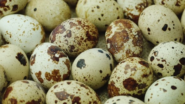 Delicacy and Healthy Food. Quail Eggs