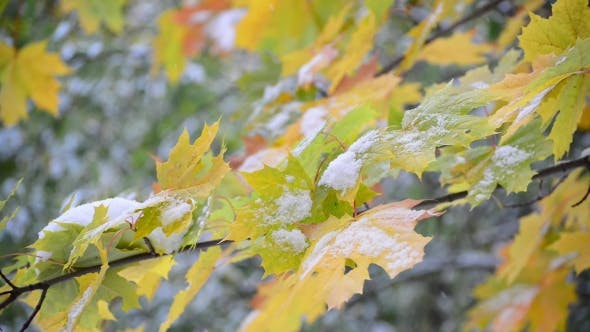 Thumbnail for First Snow in Early Autumn in Russia