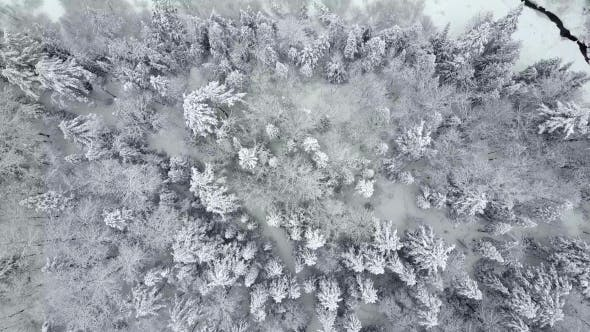 Thumbnail for Top Down Aerial View of Snowy Trees Crossing a Stream
