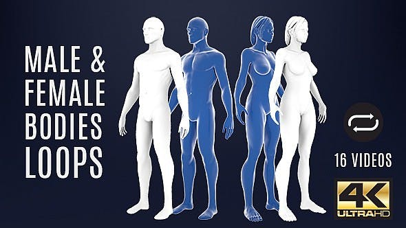 Male And Female Bodies Loops For Medicine - 16 Pack