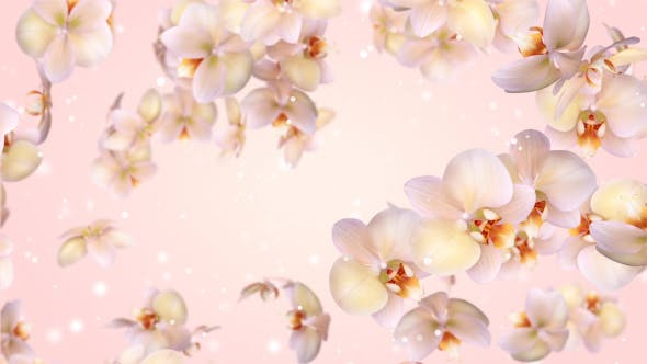 Flowers Orchid Flying
