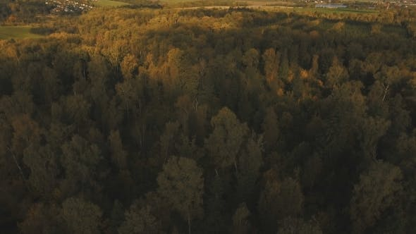 Thumbnail for Autumn Forest,aerial View.