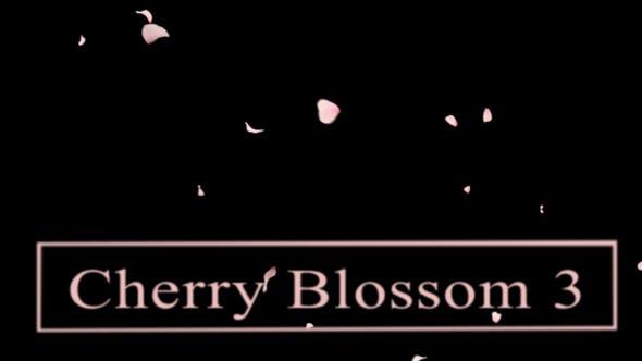 Thumbnail for Cherry Blossom3