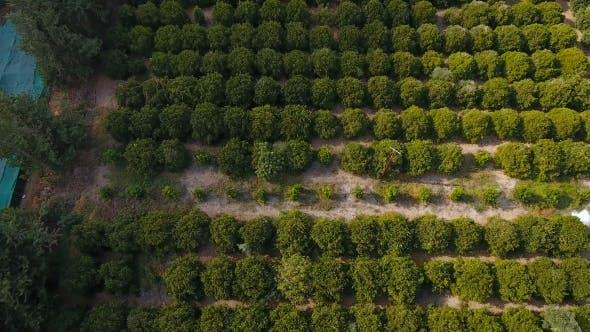 Cover Image for landschaft mit grünen bäumen, straße und meer