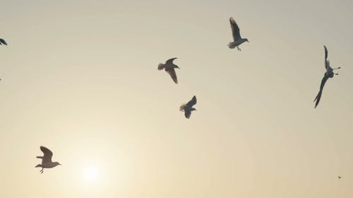 Wüste: Vögel im Sepia-Himmel. Der orange Sonnenuntergangshimmel