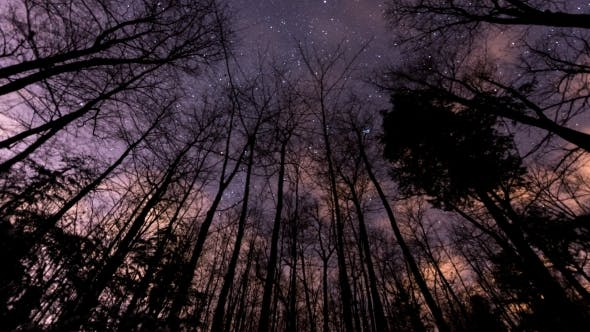 Thumbnail for of Stars Moving Behind a Row of Bare Trees