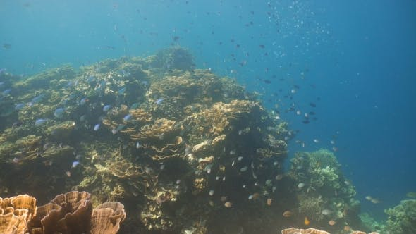 Thumbnail for Coral Reef and Tropical fish in Philippines