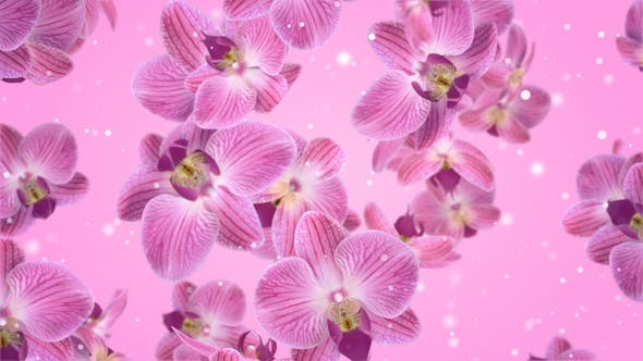 Flowers Falling Orchid