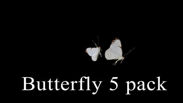 Thumbnail for Butterfly 1