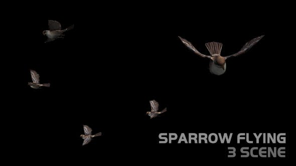 Sparrow Flying - 3 Scene