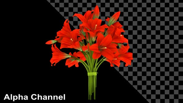 Thumbnail for Flowers Red Bouquet