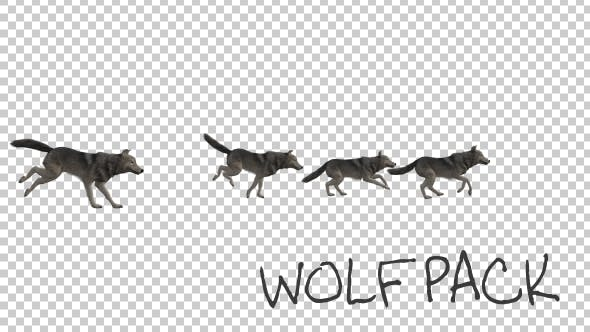 Thumbnail for Wolfpack Run Animation
