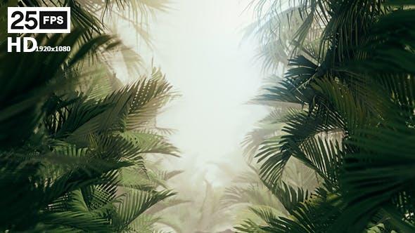 The Palms 10