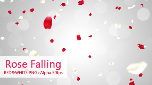 Thumbnail for Rose Falling