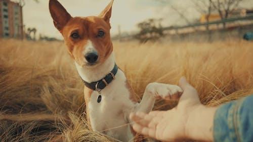 Freundschaft Hund und sein Besitzer