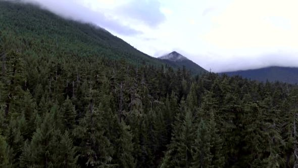 Thumbnail for Rising Out of Evergreen Fores with View of Mountains