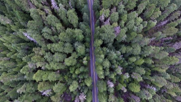 Cover Image for Top Down Moving Aerial View of a Road Through Forest with a Car Driving