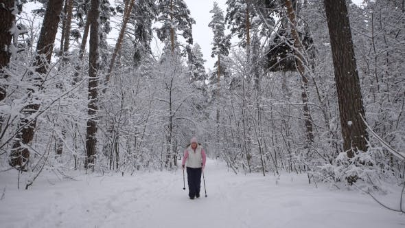 Thumbnail for Wood. Day Winter Forest. The Elderly Woman on Walk. The  Aged Is Engaged in the Health. The Pensione