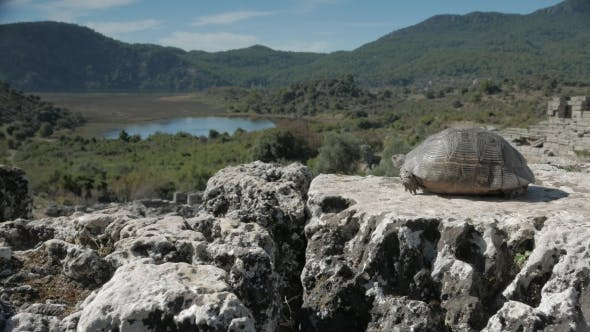 Thumbnail for A Tortoise Looking From the Top of Amphitheatre Across the Ancient Port in Kaunos, Dalyan, Turkey.