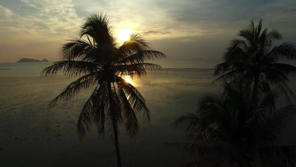 Thumbnail for Silhouettes of Palm Trees on Beach at Sunset. .