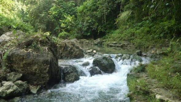 Thumbnail for River in the Rainforest